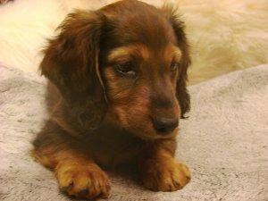 Lilou, une chienne curieuse 1c25a3e591812c303f8b1c83ce2e0916